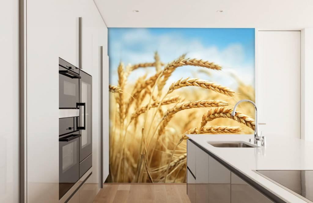 Andere - Getreide - Küchen 1