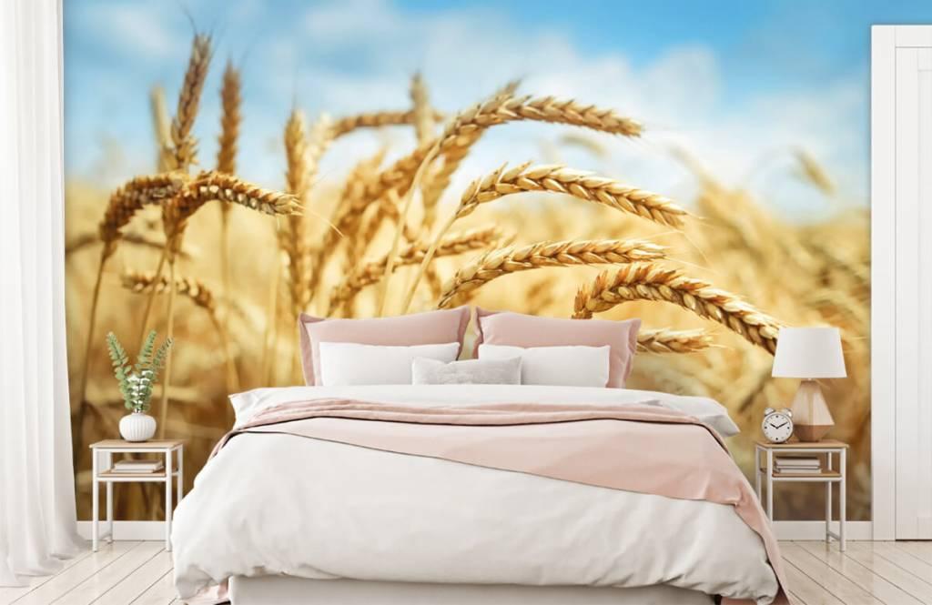 Andere - Getreide - Küchen 2
