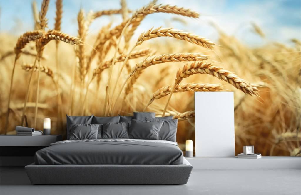 Andere - Getreide - Küchen 3