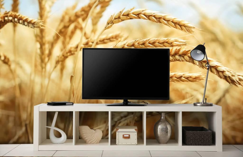 Andere - Getreide - Küchen 4