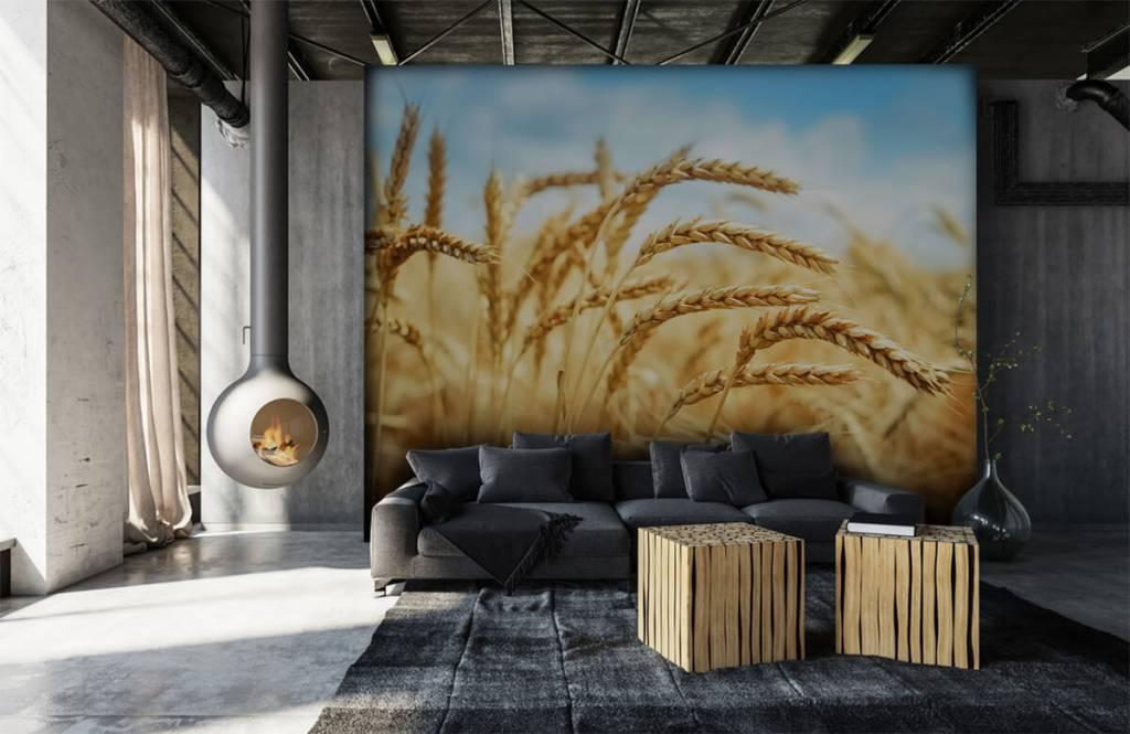 Andere - Getreide - Küchen 6