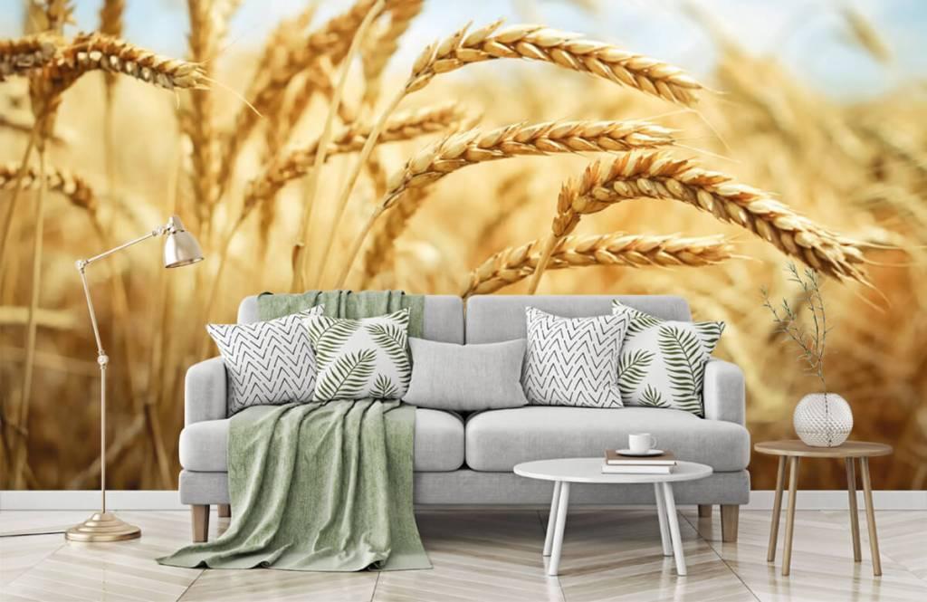 Andere - Getreide - Küchen 7