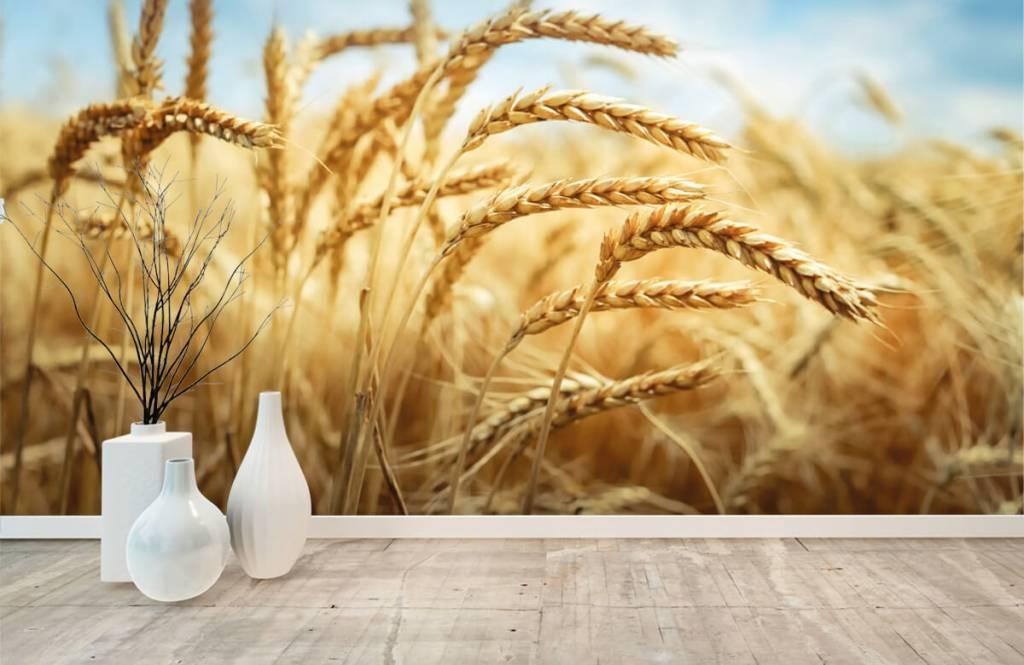 Andere - Getreide - Küchen 8
