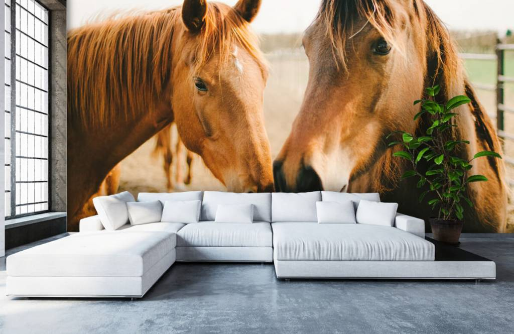 Pferde - Zwei Pferde - Kinderzimmer 4