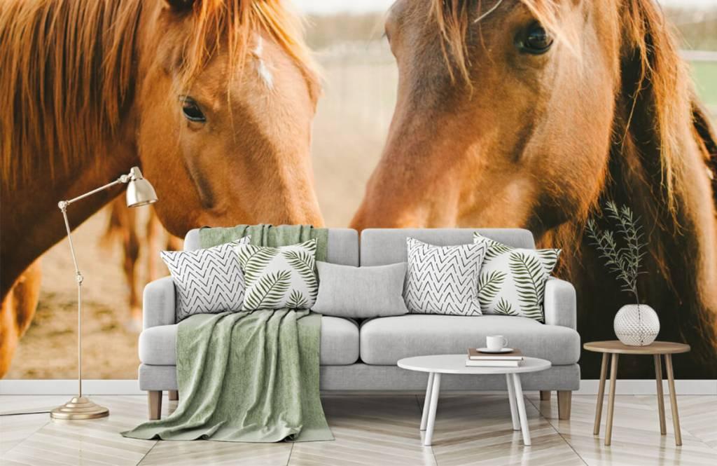 Pferde - Zwei Pferde - Kinderzimmer 5