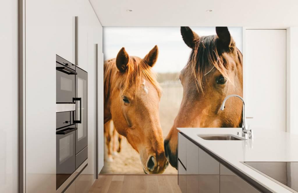 Pferde - Zwei Pferde - Kinderzimmer 7