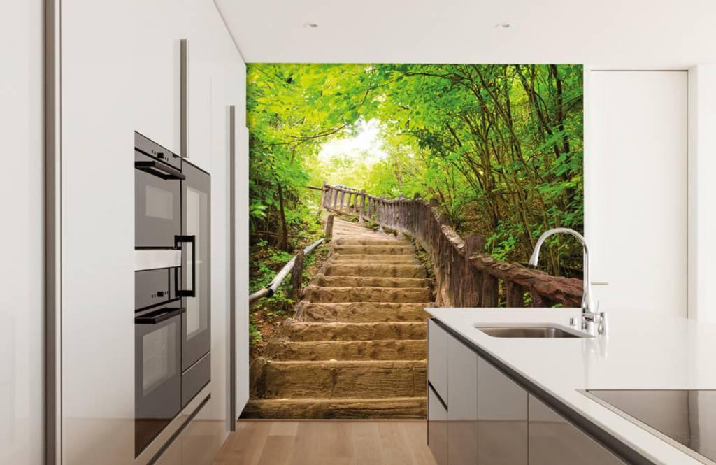Wald Tapete - Treppen im Wald - Schlafzimmer 1