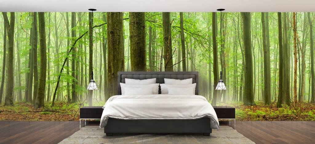 Wald Tapete - Wald mit Buchen - Tagungsraum 1