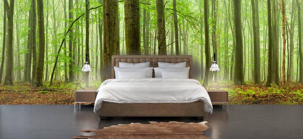 Wald Tapete - Wald mit Buchen - Tagungsraum 3