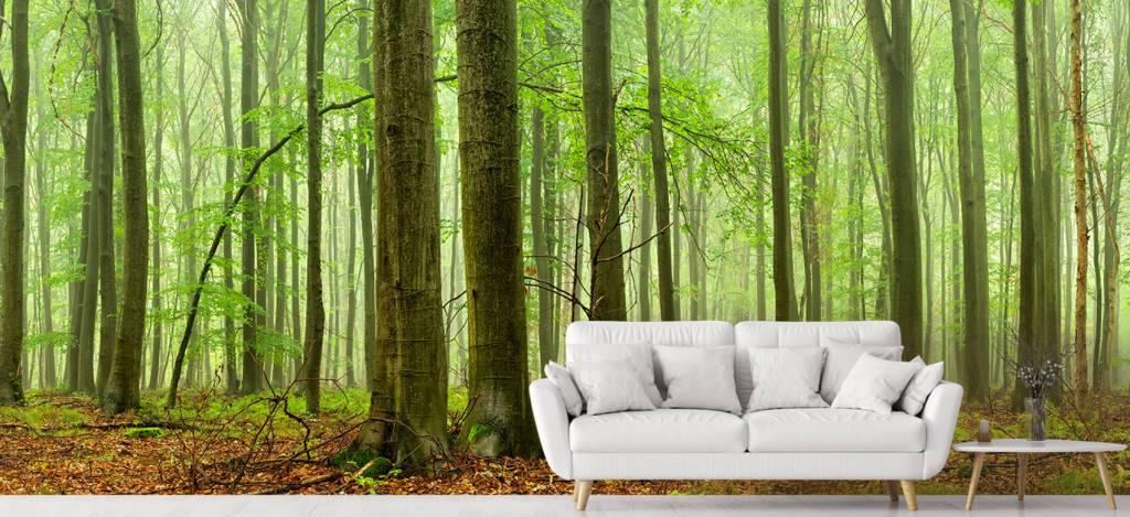 Wald Tapete - Wald mit Buchen - Tagungsraum 4