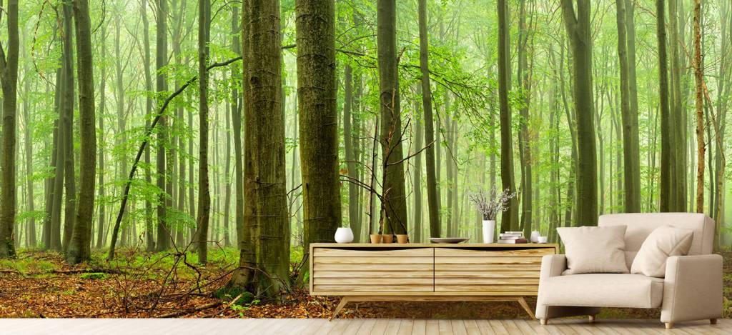 Wald Tapete - Wald mit Buchen - Tagungsraum 5