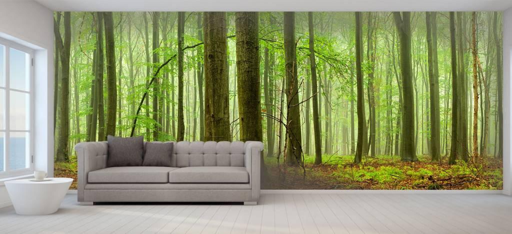 Wald Tapete - Wald mit Buchen - Tagungsraum 6