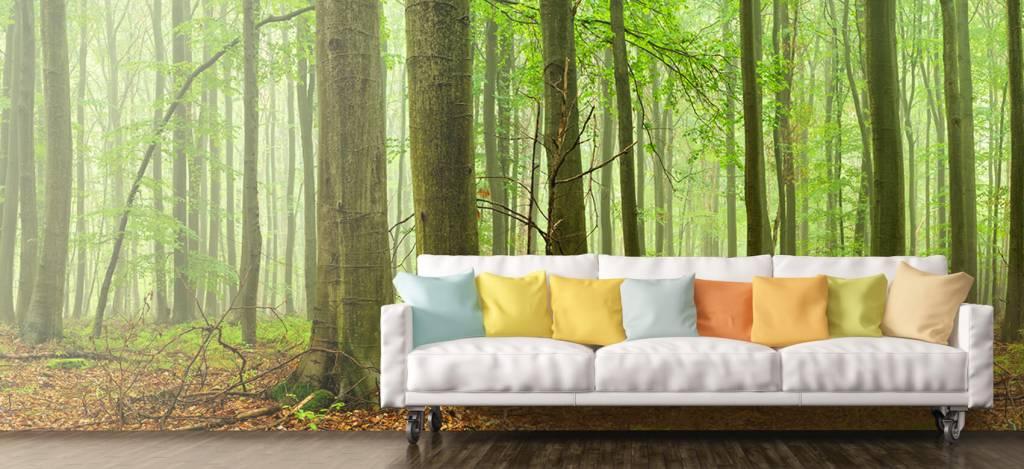 Wald Tapete - Wald mit Buchen - Tagungsraum 7