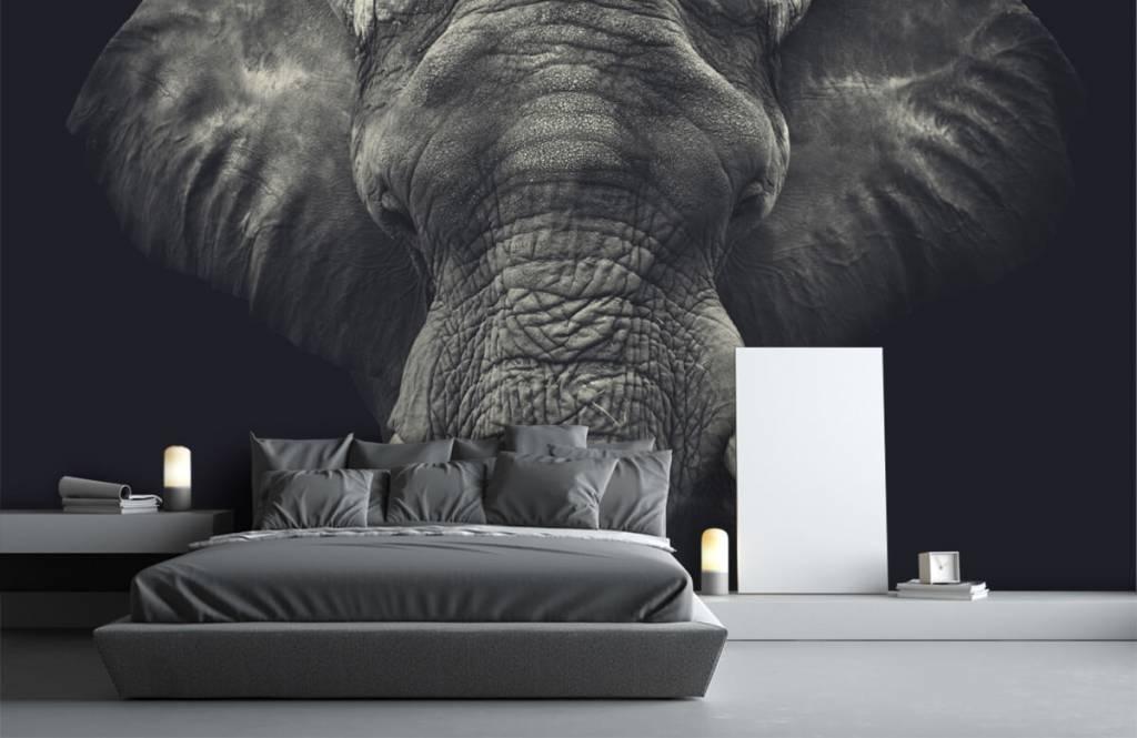 Elefanten - Elefant-Nahaufnahme - Schlafzimmer 1