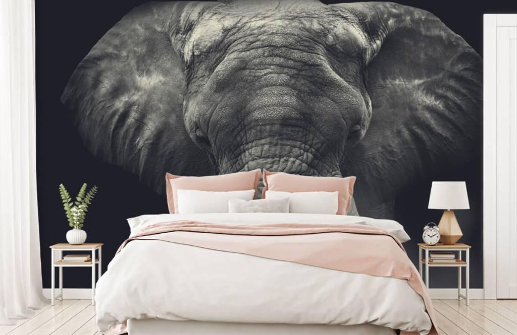 Elefanten - Elefant-Nahaufnahme - Schlafzimmer 2