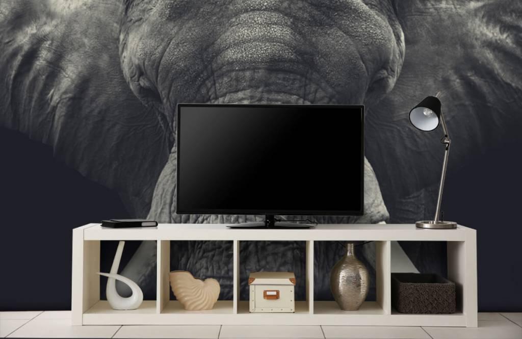 Elefanten - Elefant-Nahaufnahme - Schlafzimmer 4