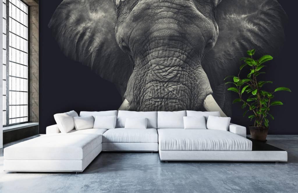Elefanten - Elefant-Nahaufnahme - Schlafzimmer 5