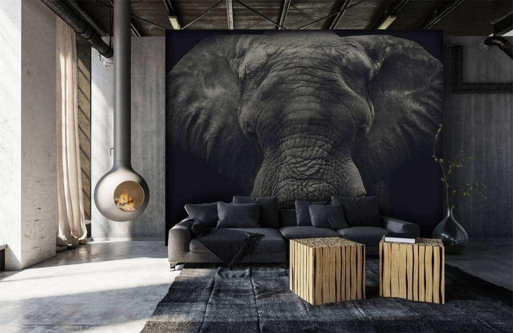 Elefanten - Elefant-Nahaufnahme - Schlafzimmer 6