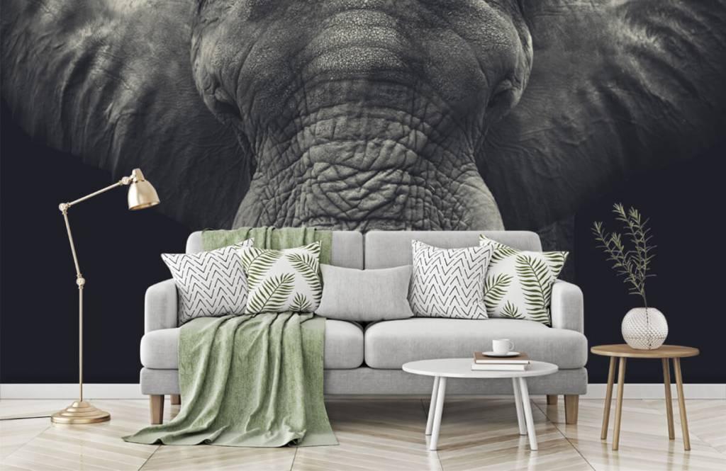 Elefanten - Elefant-Nahaufnahme - Schlafzimmer 7