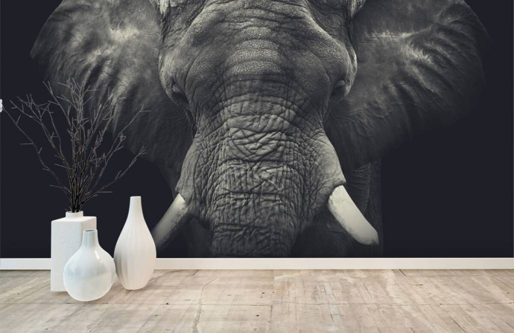 Elefanten - Elefant-Nahaufnahme - Schlafzimmer 8