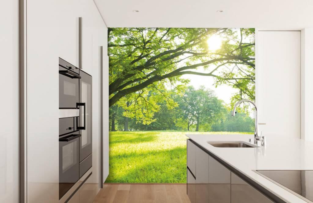 Bäume - Schöner Baum mit grünem Gras - Wohnzimmer 3