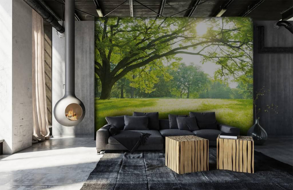 Bäume - Schöner Baum mit grünem Gras - Wohnzimmer 6