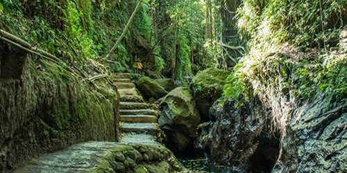 Dschungel Tapete